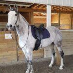 Condesa, War Horse